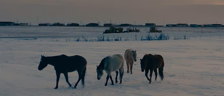 Horses walk across a snowy field
