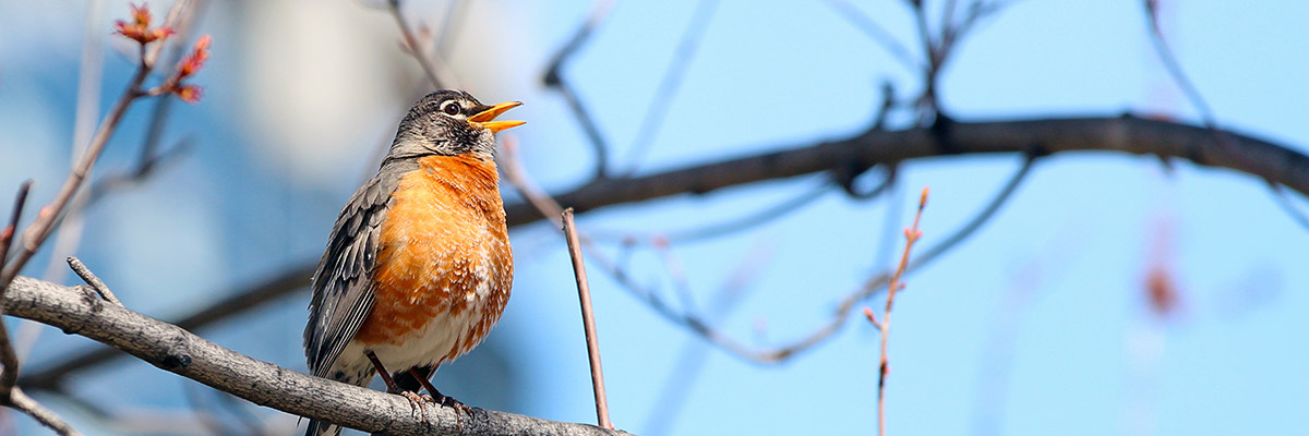 A little bird in a tree